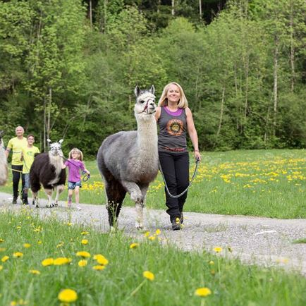 A walk with llamas and alpacas