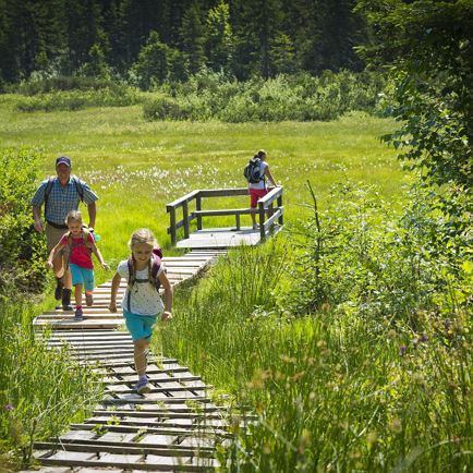 Family Hike: Experience the Moor