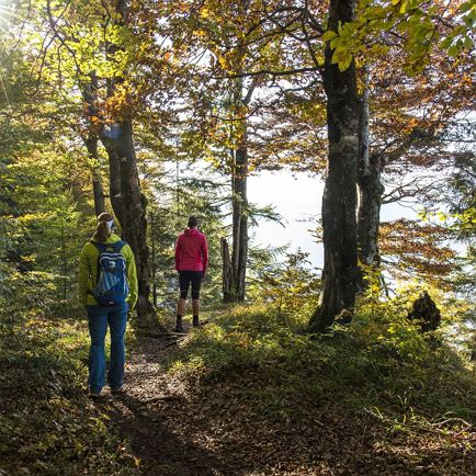 Guided hike: 'Forest and lakes hike'