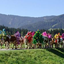 Alpine festivity with Cattle Drive