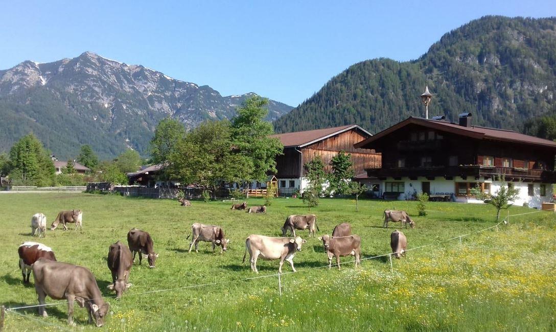 Haus Brandtner - Waidring - in den Kitzbheler Alpen