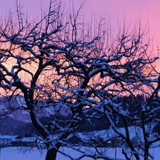 Morgenrot im Winter