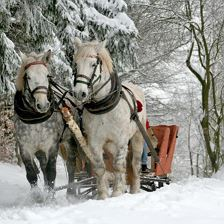 Horse-drawn sleigh rides and riding lessons