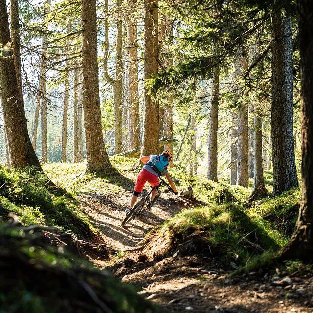 Der Fleckalmtrail führt auch durch den Wald
